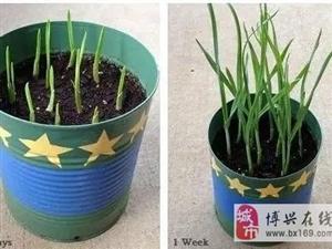 阳台别再种花了,几个花盆种这个,一年不用再买菜!