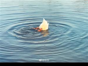 门前大桥下游过一群鸭,快来快来数一数~