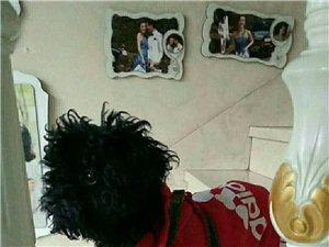 寻狗:今天上午在钟爱一生婚纱摄影门口走失黑色泰迪,拾到必有重谢!