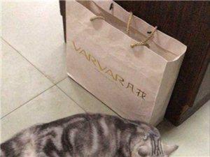 急急急!!!宠物猫丢士!