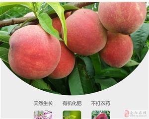 大家喜爱的桐柏朱砂红桃已经在桐柏云商上预售了!