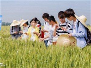 四川农大学生到粮食基地实习