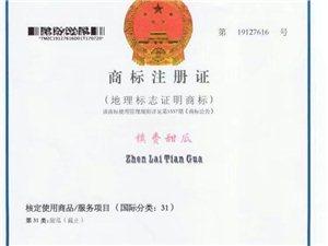 """吉林卫视新闻联播亲情奉献――""""""""镇赉甜瓜""""""""国家地理标志商标"""