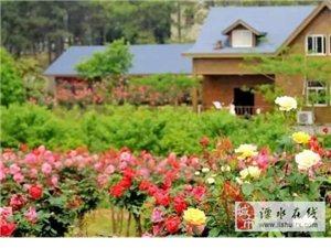 城市奇遇五一假期游南京溧水南京玫瑰园约起