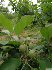 邹城又到果树挂果、山花烂漫时。