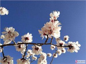 我眼里的春天桃花朵朵,你眼中的春天可否拍出来呢??