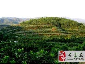 寻乌县积极推进柑橘标准化生态示范园建设!