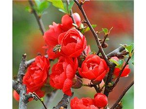 王裕超花卉摄影欣赏