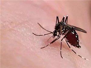 教你一��方法!整��夏天不用再跟蚊子斗��了…