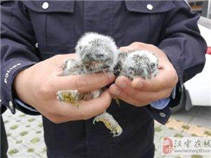 汉中民警救助两只小动物,你认识吗