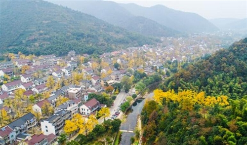 小浦银杏长廊风景区项目启动开工