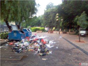 不文明行为曝光,垃圾乱扔无人处理。
