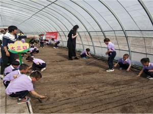 正蓝旗呼斯楞幼儿园开展种植金莲花体验活动