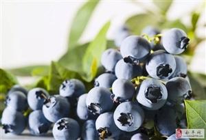 蓝莓熟了!永丰这个摘蓝莓的地方,居然可以免费吃到饱!速度约起来!!!