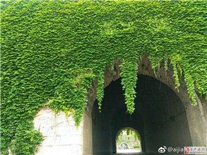 汉中古城墙上的爬山虎