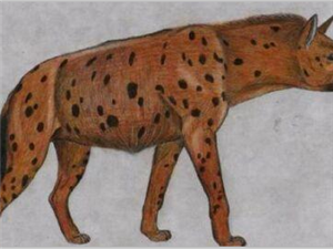 五种可能并未灭绝的动物,其中一种已绝迹一千