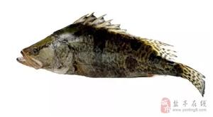 """盐亭有种鱼叫""""母猪壳"""",长相怪异,味道却堪比""""天上的龙肉"""""""