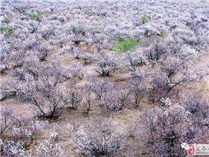 张秀娟:情系杏树塆