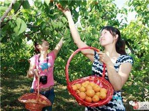 张秀娟:情系杏树�G