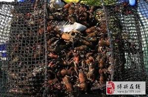 在中国待不下去的入侵物种:图1让美国损失180亿,图4吃火锅必点