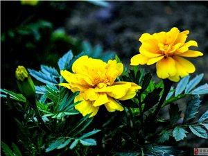 晨拍公园一组花