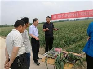 周口一村庄种洋葱引来专家传授