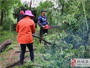昨晚双港镇遭受龙卷风袭击,60多户民房受损!