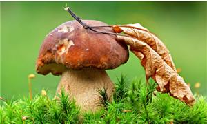 关于野生食用菌中毒防控工作的预警公告