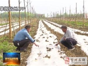 泗县:林长制改革让群众得实惠