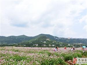 【图】我和网友看花花
