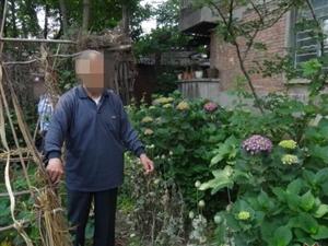 汉中八旬老翁种75株罂粟只为观赏