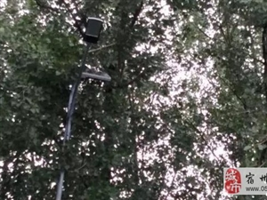 泗县新303省道的路灯竟然安装到树上去了!