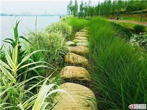 在汉中,花花草草都是爱