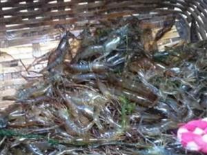 农村罕见的五大野味, 最后一种卖到上千元, 成国家保护动物