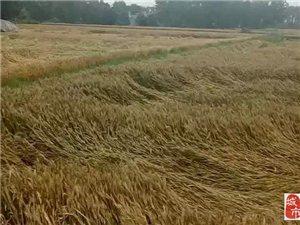 【紧急通知】在外打工的上蔡人,今年不用回来收麦了,因为... ...