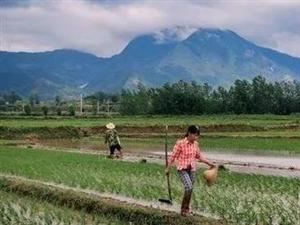 又到一年农忙时,汉中风景这里独好