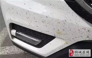 夏天车上满是飞虫尸体,怎么办才既干净又不伤车?