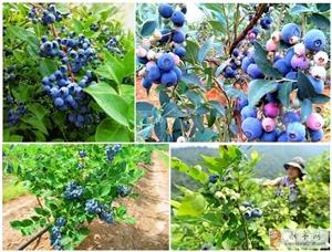 集赞就送蓝莓!吃货们,约起来~~~