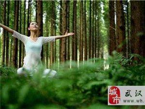 瑜伽协会|在自然中冥想,在森林中锻炼身体~~