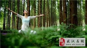 瑜伽协会 在自然中冥想,在森林中锻炼身体~~