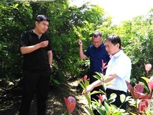 """""""新农创""""总裁张龙率队来桐考察现代农业"""