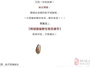 桐城首届野生桃采摘节重磅来袭!仅此一次!