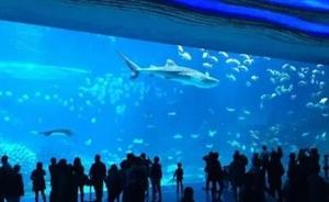 海洋王国来枝江了!2018海底世界带你畅游一夏!门票福利任性送