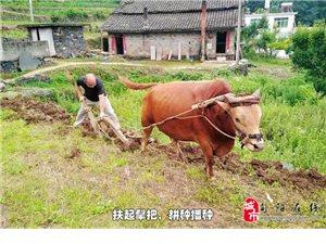挂职扶贫,徐星项在旬阳县任家湾村当支书的日子