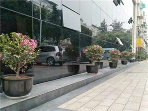 华亮园艺种植场感恩一路有您-广汉市和天下酒楼(图片)