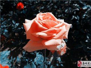 迟日江山丽,暖风花草香。
