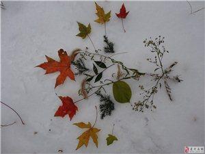 ★〓〓◆雪之梦◆〓〓★