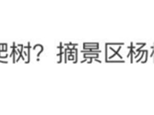 【提醒】游客偷摘杨梅坠亡,景区被判赔4万5,网友吵翻了…