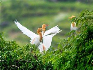 在丰都十直镇,摄影师拍下了一道绝美的自然风光~
