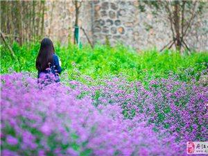惟愿现世安稳,岁月静好,每每于沉思凝眸中拈花含笑――沙沟河随拍